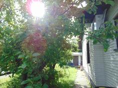 Oman pihan omenapuut
