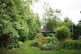 Suurella tontilla on paljon kauniita kukkia, pensaita ja puita.