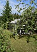 Kasvihuone ja omenapuu