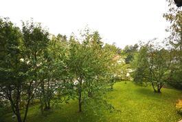 Mm. omena- ja luumupuita
