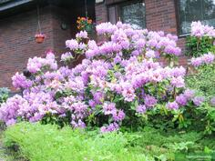 Puutarhan kukkaloistoa