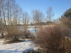 Näkymää takapihalle ja joelle.