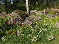 Kesän kukkaloistoa takapihalla.