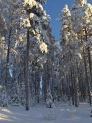 Talven näkymät takapihalla.