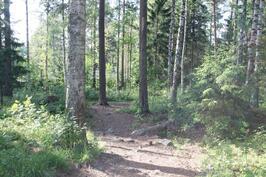 Pihasta suoraan metsäpolulle