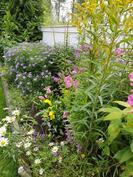 Kukat vaihtuvat kesän mittaan