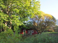 Kiinteistön kaunilla puutarhakulmatontilla myös mm. pun. viinimarjaa ja kauniita vaahterapuita!