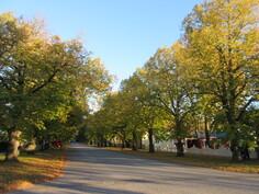Kaskisten keskustan viihtyisäksi tekee mm. lyhyet matkat palveluihin, puiden runsaus ...
