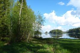 Viheralue Pääjärven rannalla