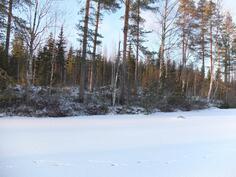 Tontti talvella jäältä päin katsottuna