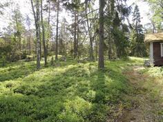 Rantasaunan ympäristössä on vehreää marjametsää