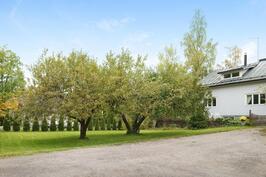 Isoa etupihaa hallitsee kaksi komeaa omenapuuta