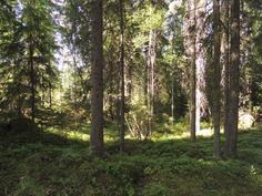 Mökin ympärillä metsää