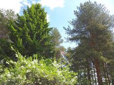 Eteläpihalla mm. lipputanko ja koristeomenapuita