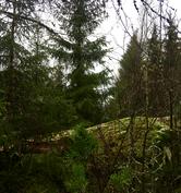 Näkymä länteen, Kalliomaastoa, jonka takana vielä sekametsää