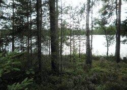 Tila Vehkaniemi RN:o 2:104
