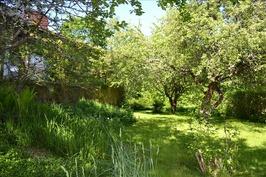 puutarhaa, omenapuita