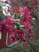 Kasvillisuutta kesällä