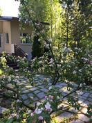 Kukkivatko omenapuut ensi kesänä Sinun pihallasi?