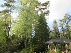 Komealta n.0,7ha omalta metsäiseltä tontilta saa mukavasti myös polttopuut!