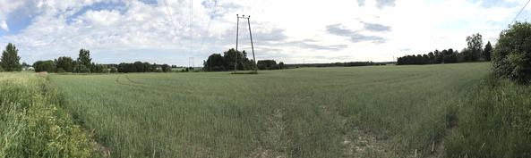 Näkymä tontin takalaidalta peltomaisemalle päin.