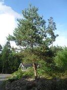 Talon ympärillä on kaunis luonnonläheinen iso 3600 m2 puutarhatontti...
