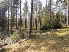 Metsämaisemaa takapihalta
