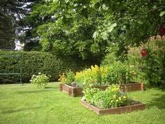 Puutarhassa mm. ruusupensaita, perennaistutuksia ja kasvatuslaatikoissa on ...