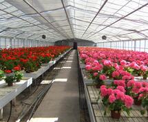 Kesän 2017 kukkia