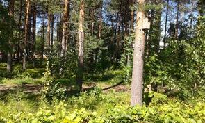 Takapihalta rauhalliselle puistoalueelle Tuulentien (n. 100 m päässä) suuntaan olevaa valokuvaa.