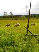 Pellolla on tilaa lampaiden laiduntaa tai hevosten kirmata, kuitenkin sen saa myös vuokrattua
