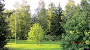 Tontin metsää