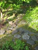 Kivipolku läpi istutusten.