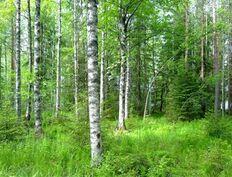 Kiminkijärven tontin sähköliittymän hinta 9.585,20 €.