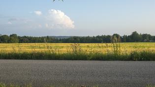Näkymä länteen. Rauhallinen ja kaunis peltomaisema. Asfalttitie.