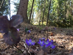 Omaa rauhaa puhtaan luonnon helmassa