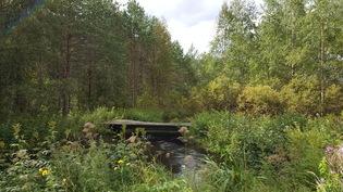 Silta joen yli metsäpalstalle