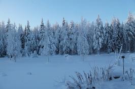 takapihaa talvella