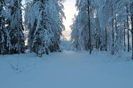 Etupihan metsäistä osaa talvella