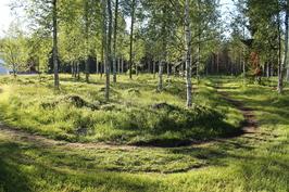 Etupihan metsäistä osaa