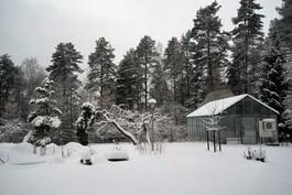 Talvinen puutarha