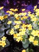Pihanhoitoa helpottaa ja värikkyyden antaa luonnon oma kukkaloisto.