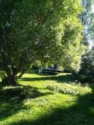 Rehevä takapiha, puita ja istutuksia