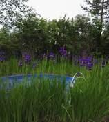 uima-altaan kesäkuva