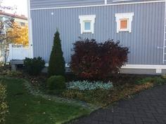 Varjoisen alueen kasvit on istutettu pohjoispäätyyn, josta kulku talon takapihalle
