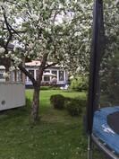 Pihassa on paljon istutuksia, mm. omenapuita, kirsikkapuu, luumupuu, marjapensaita