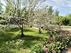 Etupihalla omenapuita