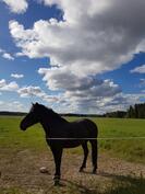 Toteuta unelmasi hevostilalla!