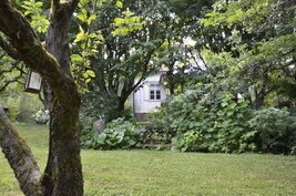 Takapihan puutarhaa